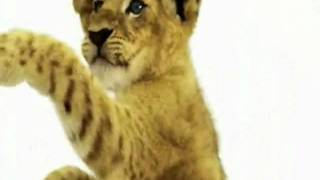 Happy Birthday, Lion Cub Style!