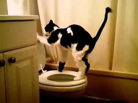 Кот на унитазе flv Юмор! Прикол! Смех