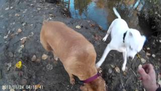 Dogs swimming under water  go pro knock off ( Turnagy action cam )