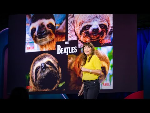 download song Sloths! The strange life of the world's slowest mammal | Lucy Cooke free