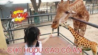 CHO HƯƠU CAO CỔ ĂN LÁ 😍 Giraffe Eating Leaves ♥ Dâu Tây Channel