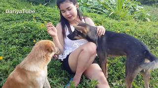 Wow Lovely Smart Girl Feed Special Food To Smart Dogs At Rice Fields