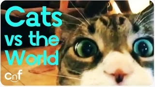 Cats Vs the World | Us Against Them