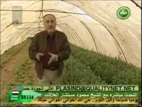 زياد طمليه مزرعة المهندس عبدالرحيم بركات   زعتر thumbnail