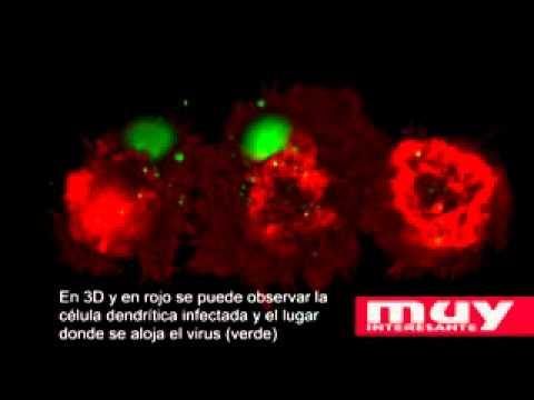 El virus del SIDA utiliza las células como caballo de Troya