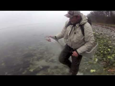 Fishing for escaped rainbow trout