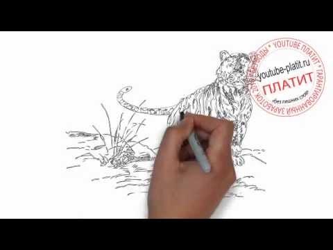 Видео как нарисовать амурского тигра
