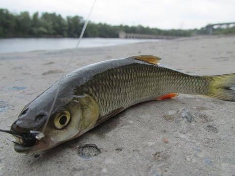 СУпер рыбалка в центре города на мушку маховой удочкой ! Прощай лето! Запорожье, Днепр.