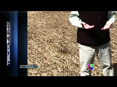 JAIME MAUSSAN UFO, CROP CIRCLES 2013 SHADOW CAUGHT ON VIDEO