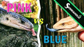Pink Tongues vs. Blue Tongues - Ep. 78