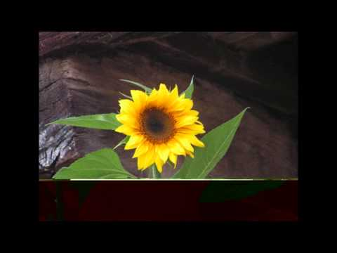 helios ruiz _  disco entero _ GIRASOLES (2009)