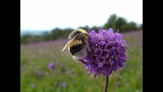 Averting the Insect Apocalypse: a talk by Professor Dave Goulson