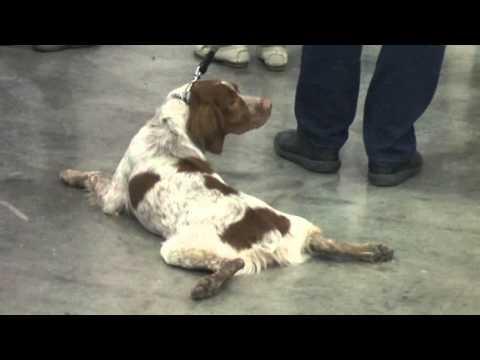 Выставка собак 'Россия-2015'. Портреты) 1.11.2015.