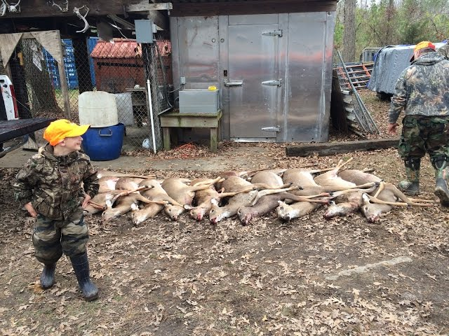 Deer Hunting with dogs (Millfield) 50+ shots with kill shots