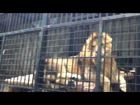 2011-05-04 野毛山動物園1
