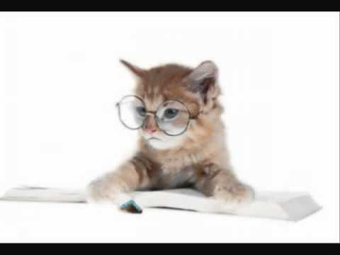 All Of Harry Potter Re-Enacted By Cats in 1 Minute