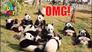 Funny Pandas Videos | Try Not To Laugh Video Compilation | Epic Laughs