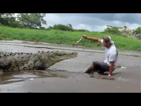 يلعب مع تمساح انظر ماذا حدث