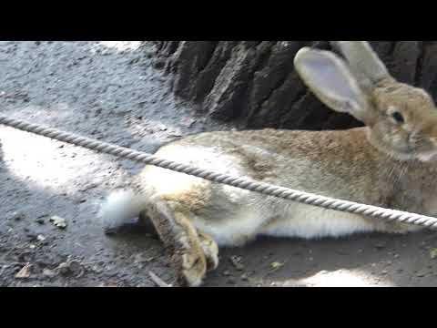 Margaret Island Zoo - Rabbits