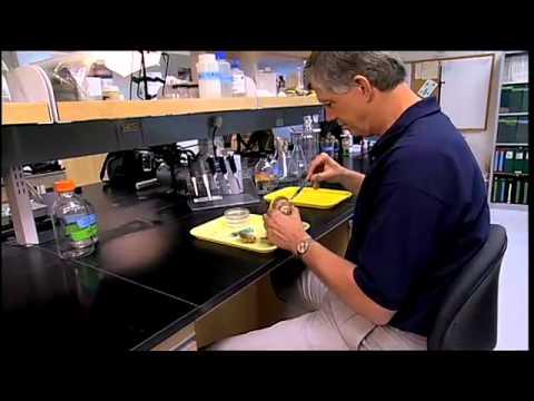 Eugene Burreson: Oyster Scientist