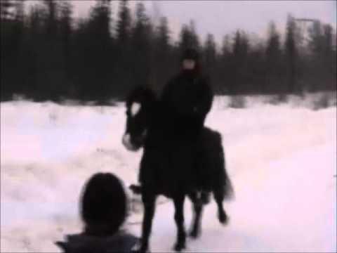 Passträning Med Saxi För Jamila Berg video