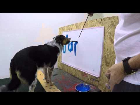 Jumpy, un Border Collie que es capaz de escribir su nombre