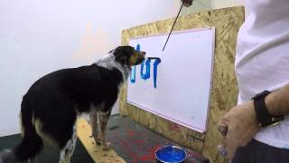 Smart dog writes its name