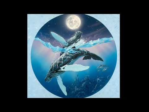 The Art of Apollo - Pt 1. dolphins and whales. World's Leading Environmental Artists