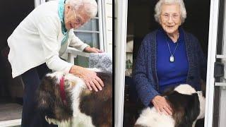 St. Bernard Keeps 95-Year-Old Widow Company