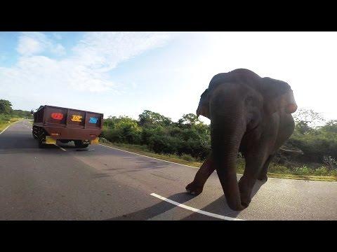 Elephant attack Sri Lanka