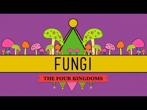 Fungi: Death Becomes Them - CrashCourse Biology #39
