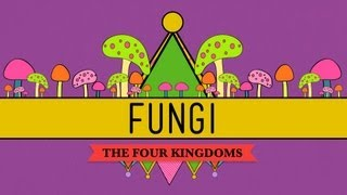 Fungi: Death Becomes Them - CrashCourse Biology #39
