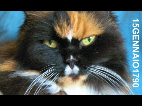 Sheila Hunts in a bag – Born to be Cats ! – gatti selvaggi