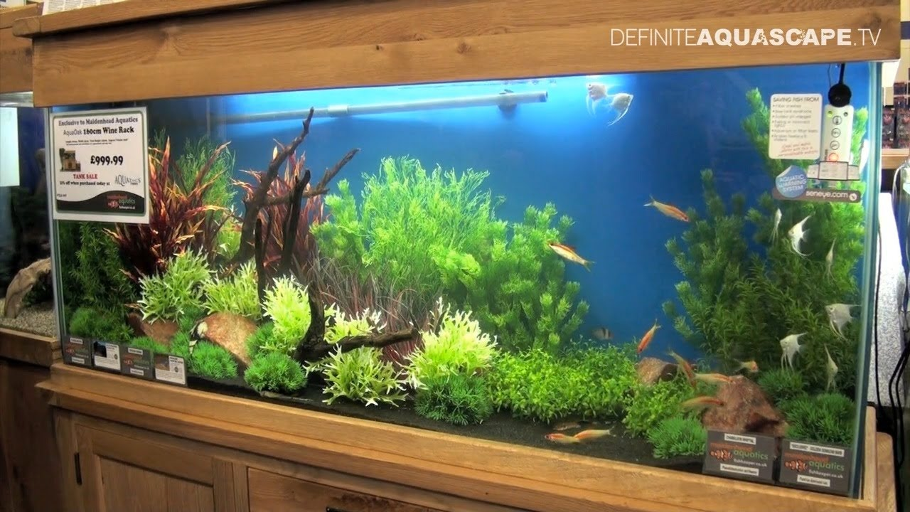 Aquascape Archives Home