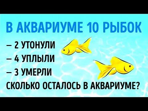 9 КАВЕРЗНЫХ ЗАГАДОК, КОТОРЫЕ ВЗОРВУТ ВАШ МОЗГ