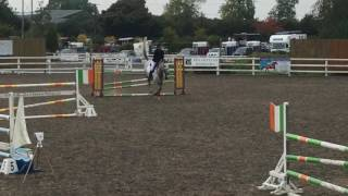 Anglo Arab jumping 1.25m