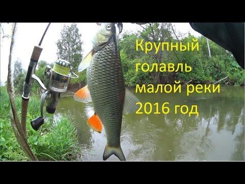 рыбалка на донку на голавль в реке