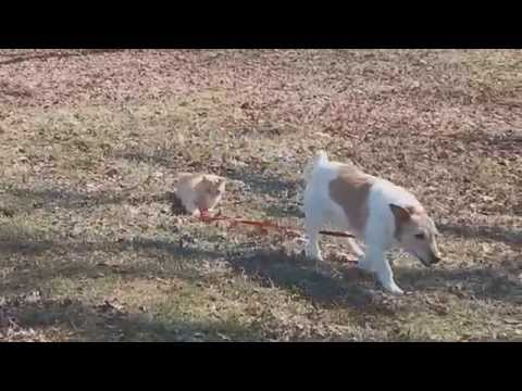 El gato  que no dejar caminar a su perro en el parque