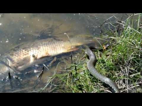 рыбалка на волго-ахтубинской пойме дикарями