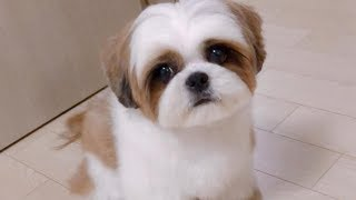 Cute Dog videos  - Cute and Funny Dog Moments Compilation #1