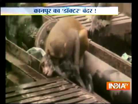 Monkey saves electrocuted friend at Kanpur railway station