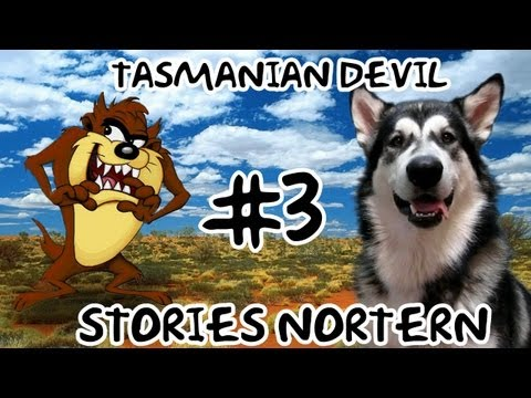 Тасманский Дьявол Stories Northern (Tasmanian Devils)