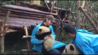 Lee with panda  Part III
