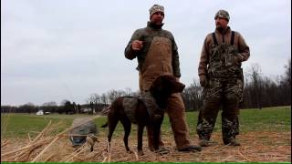 Hunting Maryland's Eastern Shore with Avery & Banded