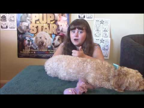 Pup Star by Morgan B.