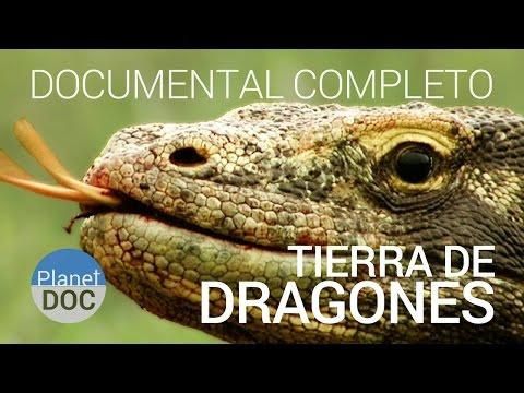 Documental Completo |  El Dragon De Komodo. Tierra De Dragones  - Planet Doc video