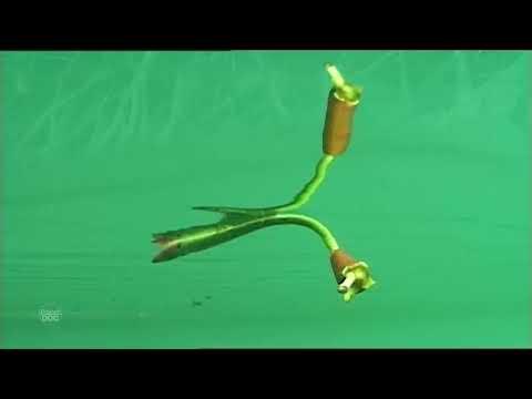 Documental Completo |  El Dragon de Komodo. Tierra de Dragones  - Planet Doc