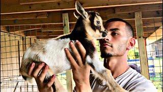 ALL my BABY animals!   Blake'sExoticAnimalRanch