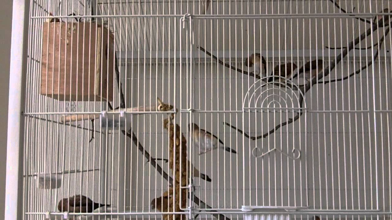 My wonderful new Finch Flight Cage Prevue F030 - YouTube