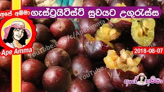 Governor's plum for gastritis cure